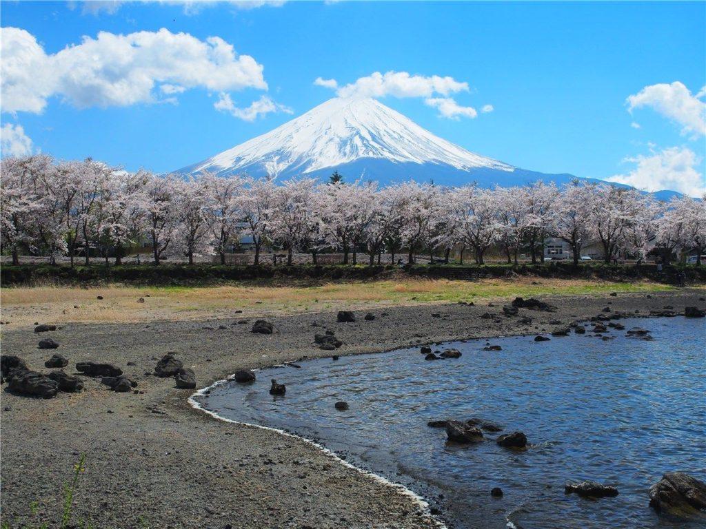 【山梨の絶景】富士山と桜と河口湖が撮れる穴場スポット「八木崎公園」に行ってきました