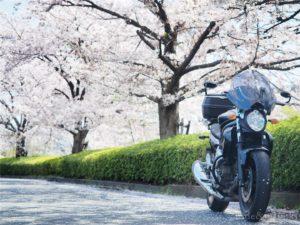 グラディウス400と桜並木