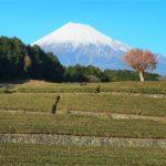 【絶景スポット】またまた富士山x茶畑のコラボスポット「大淵笹場」に行ってきたよ!【静岡】
