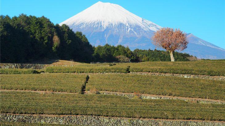 大淵笹場から見る富士山1
