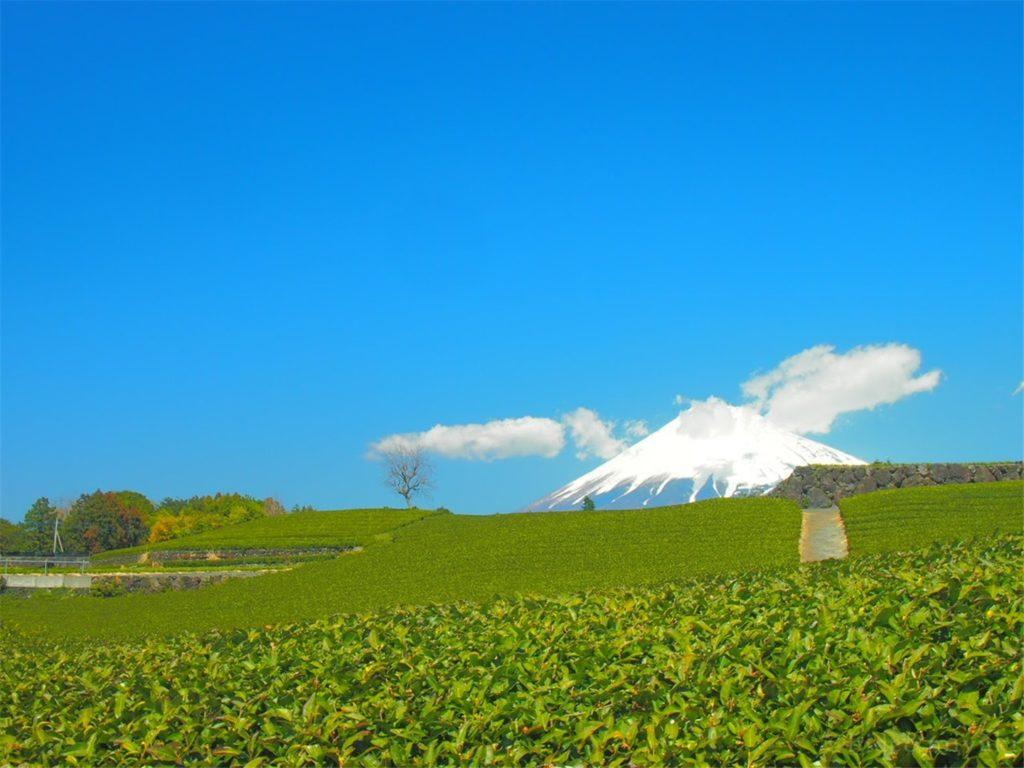 【絶景スポット】富士山x茶畑のコラボスポット「今宮の茶畑」に行ってきたよ!【静岡】