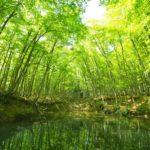 【新潟の絶景】漂う異世界感…美人林に行ってきました!確かに色白で背の高い子ばかりの絶景スポットです!