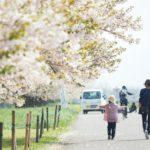 【長野の絶景】千曲川堤防の桜堤は数キロの桜並木が続く絶景スポットでした。遅めのお花見にピッタリです!