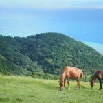 【宮崎の絶景】おっ馬おるやん!「都井岬」には草原と海と野生の馬が1枚の写真に収められるレアな場所があるんです