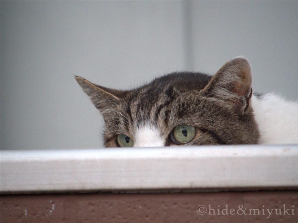 作例07 隠れているつもりの猫