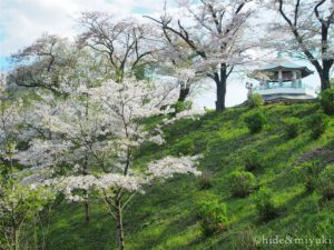【神奈川の散策スポット】春の「弘法山公園」に遊びに行ってきました!うっすらと桜も咲いていていい感じ。