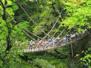 【徳島の絶景】「祖谷のかずら橋」ちょっと観光していくのには丁度いいスポットでした!